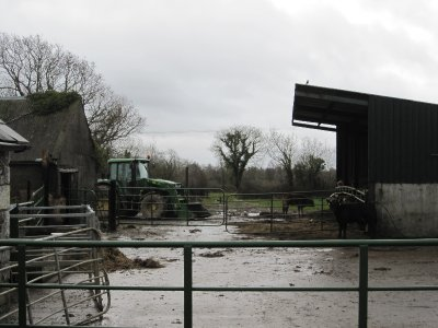 A typical farmyard near Newcastle West