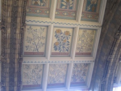 Monographs of herbs on the ceiling