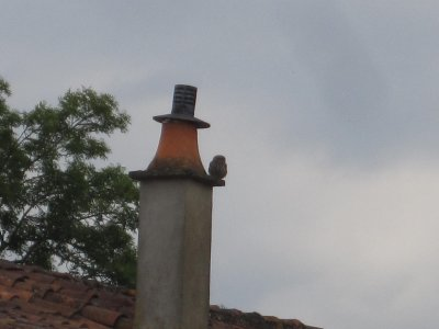 """Lord of """"Owl"""" he surveys."""