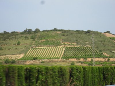 Vineyards in the Rioja district.