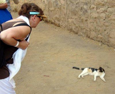 Sandi befriends a temple kitty.