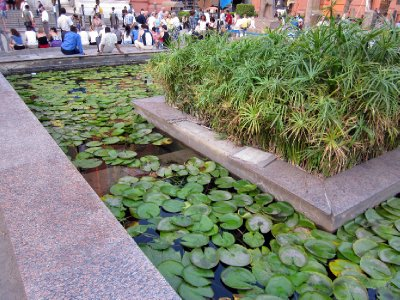 The pond contains both lotus and papyrus plants, representing the Kingdoms of Upper and Lower Egypt, respectively.