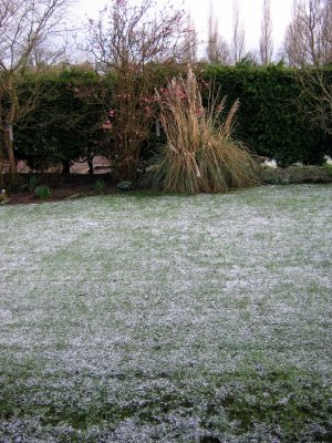 Snow on the back lawn