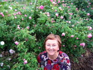 Sandi among Rosa Damascena bushes