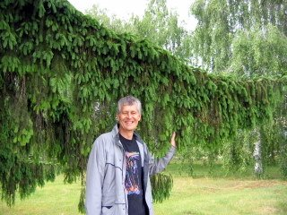 "David and the ""shaggy-dog"" tree"