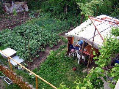 Ivanka's veggie garden