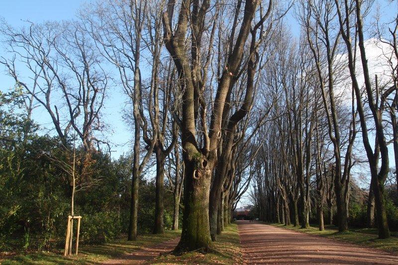 Serralves Park