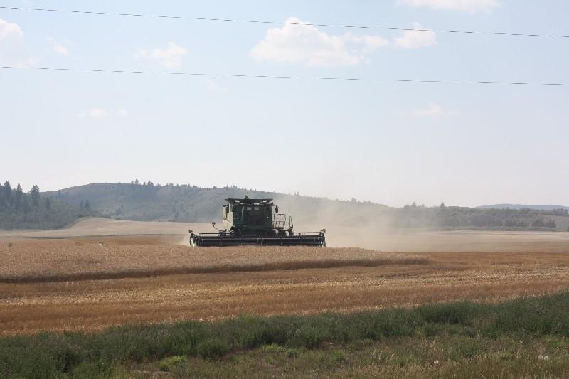 Harvesting in Swan Valley