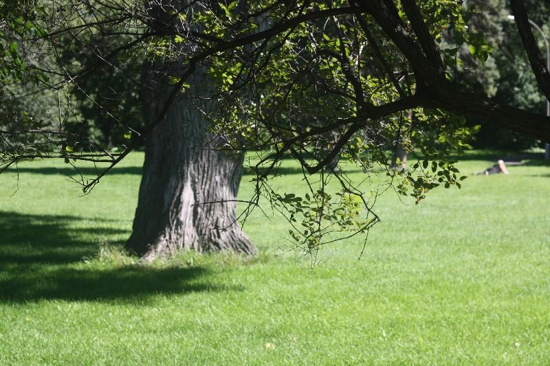 Munson Park
