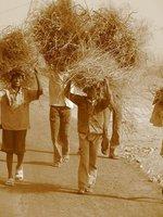 Children at Work--- Rural charm ! Gurgaon