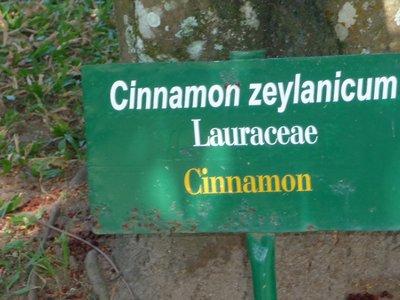 cinnamon sign