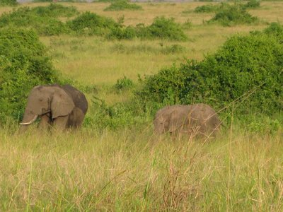 Elephants by the road!