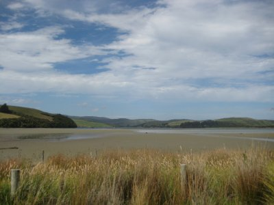 NZ_and_Misc_678.jpg