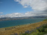 NZ_and_Misc_564.jpg