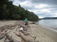 NZ_and_Misc_775_-_FAV.jpg