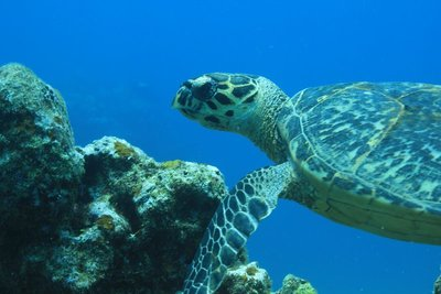 Turtles are my favorite
