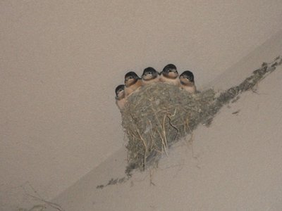 birds nesting at the house