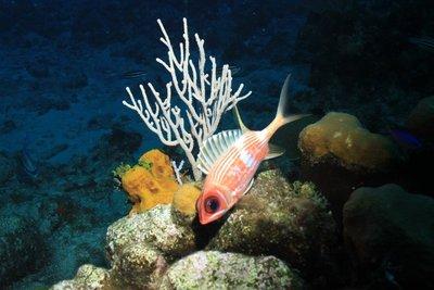 Emmy fish