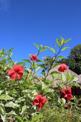 flowers in Huahine