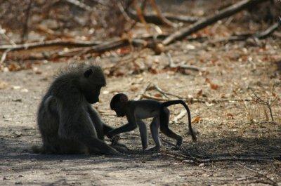 Africa_Oct_09_514.jpg