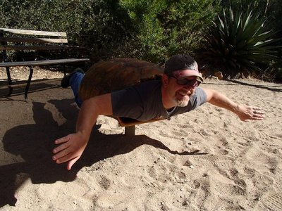 Curt as a turtle