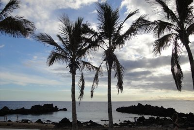 palm trees at dive site