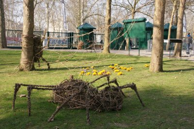Spider in the park