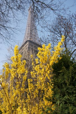 Eiffel tower with flowers