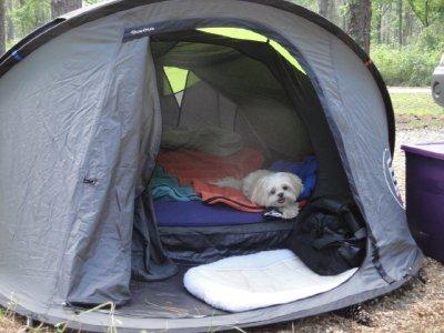 Emma enjoying the tent
