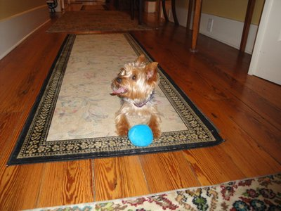 Daisy playing ball