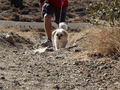Emma hiking