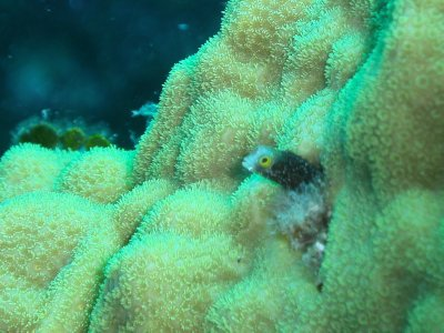 Fish peeking out of coral