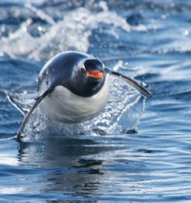 I love the penguins