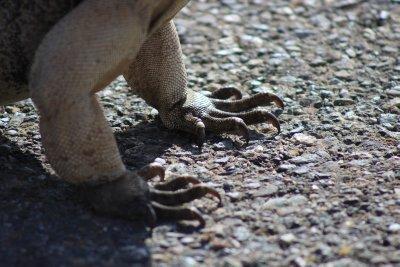 Iggy feet