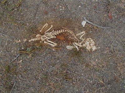 skeletal remains