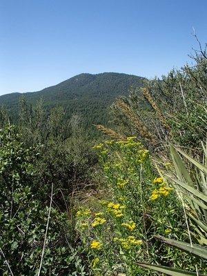 Trail 74