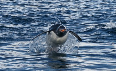 another penguin jump