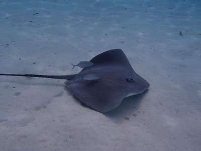 another ray