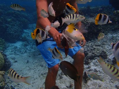 attracting fish with bread