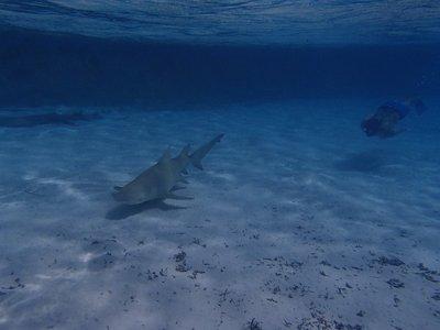 chasing sharks