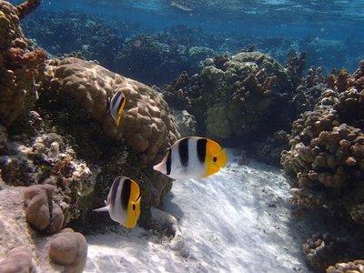 coral garden 1