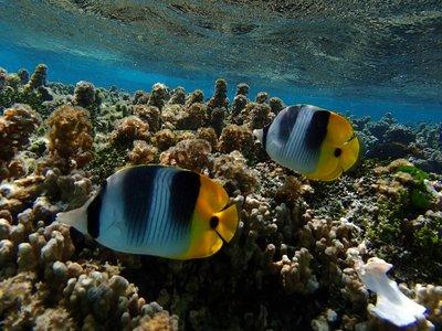 coral gardens 3