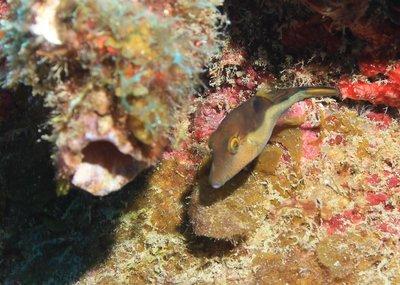 cute little brown fish