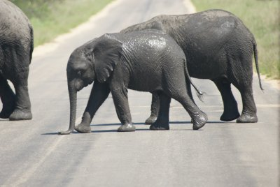 dragging the trunk