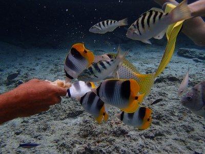 feeding the fish bread