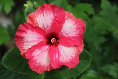 flower at plantation