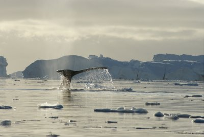 humpback tail 14