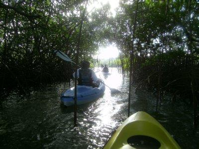 kayaking thru mangroves