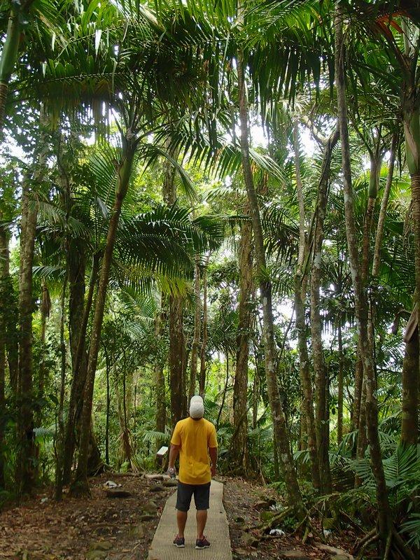 large_Big_Tree_Trail__1_of_1_.jpg