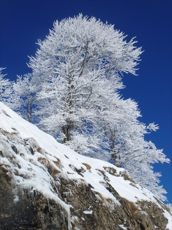 white trees on crag